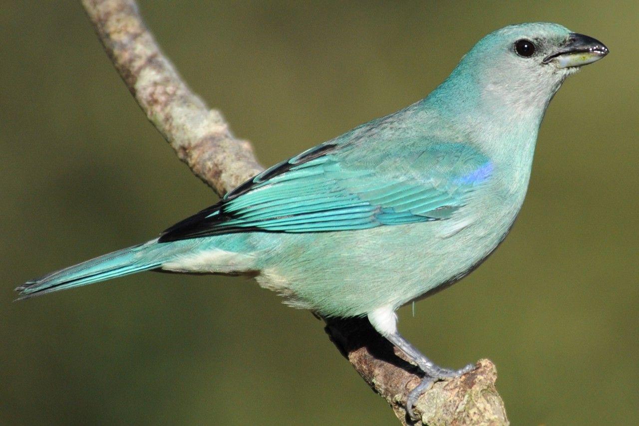 Conhecido Instituto Rã-bugio para Conservação da Biodiversidade SQ92