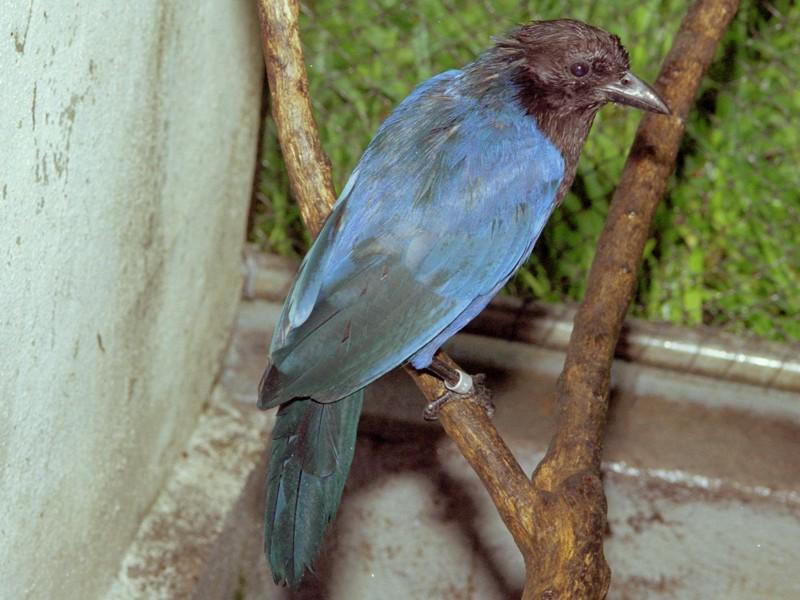 instituto rã bugio para conservação da biodiversidade